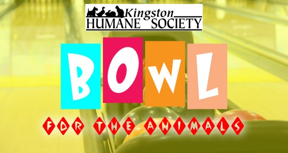 Bowl for Animals